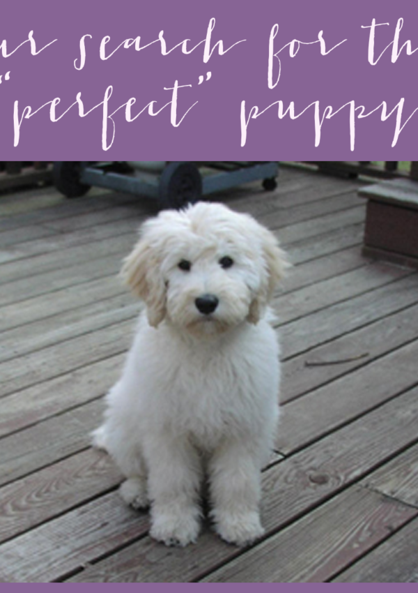 "Our search for the ""perfect"" puppy!"