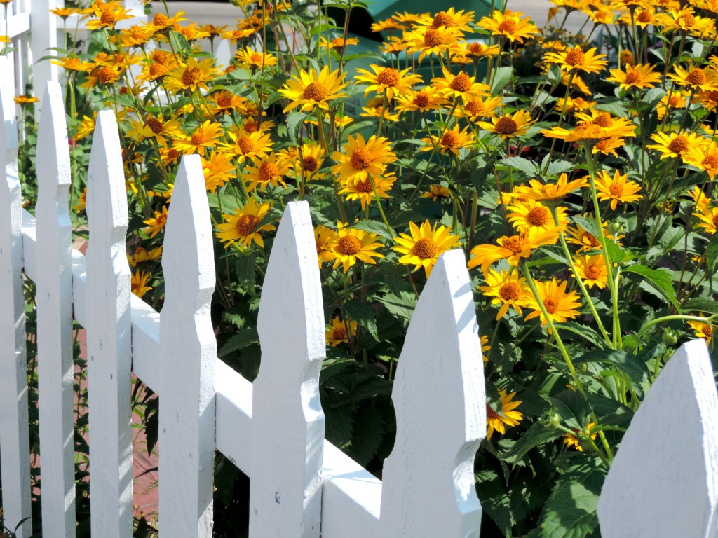 Door County - White Picket Fence - Flowers
