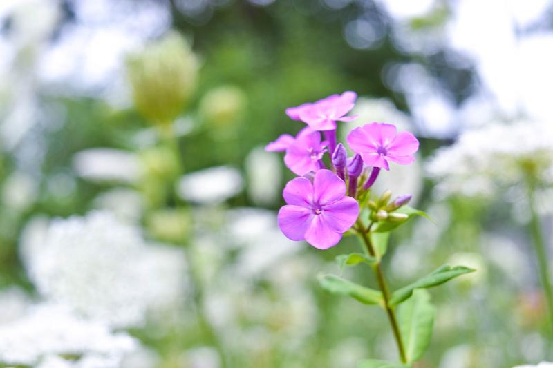 Backyard Garden 8.9.15