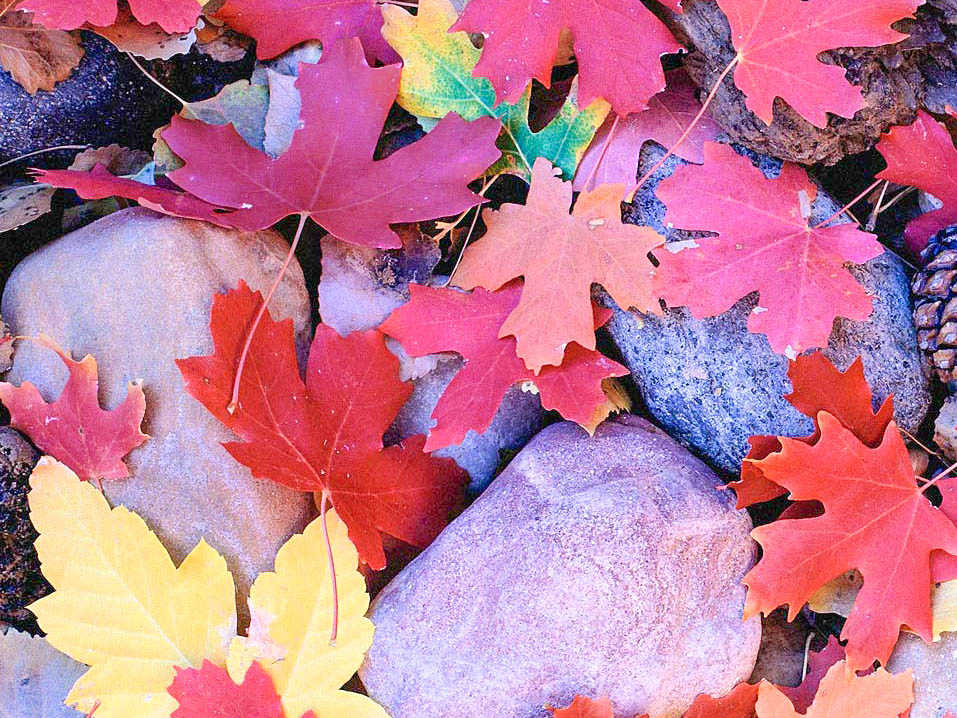 ColorfulLeaves-2 copy