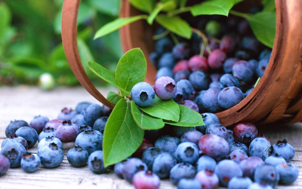 blueberry_fruit_basket