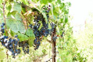 Take me back to this gorgeous vineyard!!