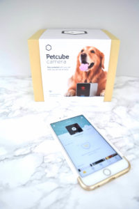petcube_the_chambray_bunny_review_5