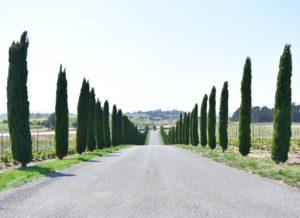 Napa Valley Vineyards 2