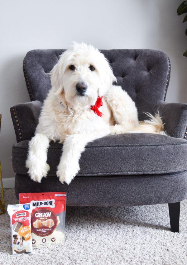 Sophie & Ollie's New Favorite Treats: Milk-Bone Long-Lasting Chews!