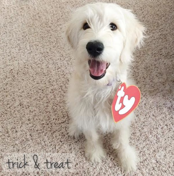 Pet-O-Ween: Quick & Easy Printable Ty Costume