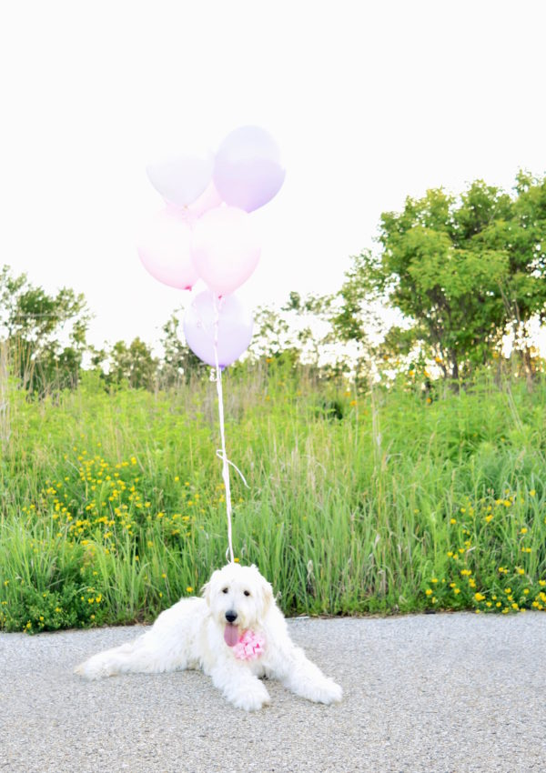 Sophie is ONE! + a Berry Milkbone Doggy Cake Recipe!