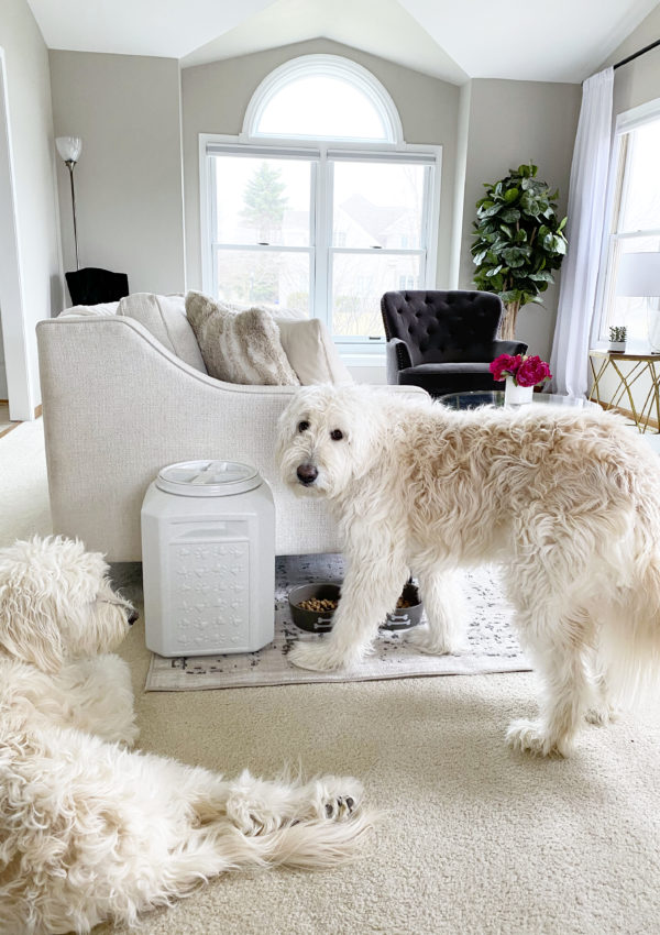 How To Keep Your Dog's Food Fresh with Vittles Vault