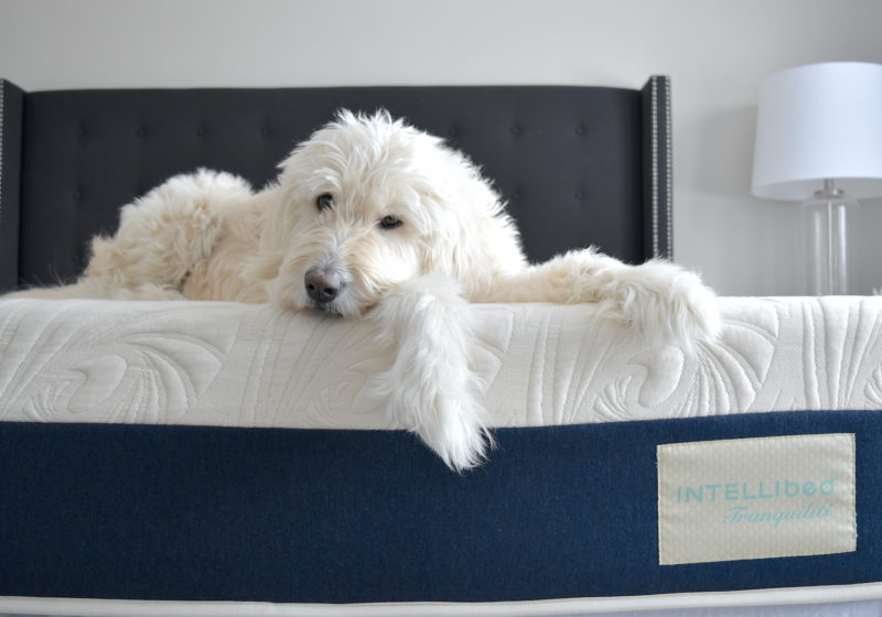 IntelliBed Tranquiliti Review